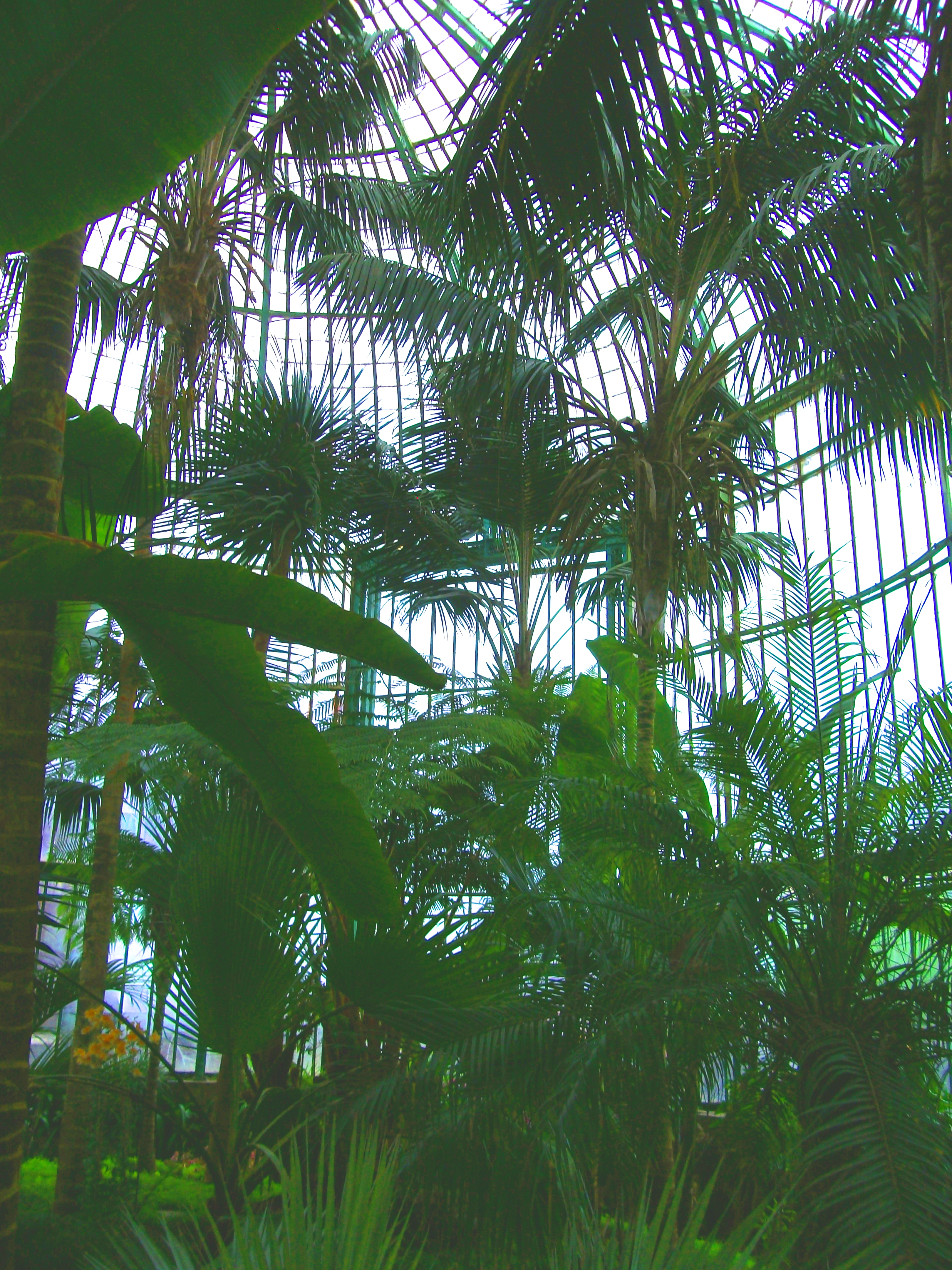 Palmenserre Koninklijke Serres