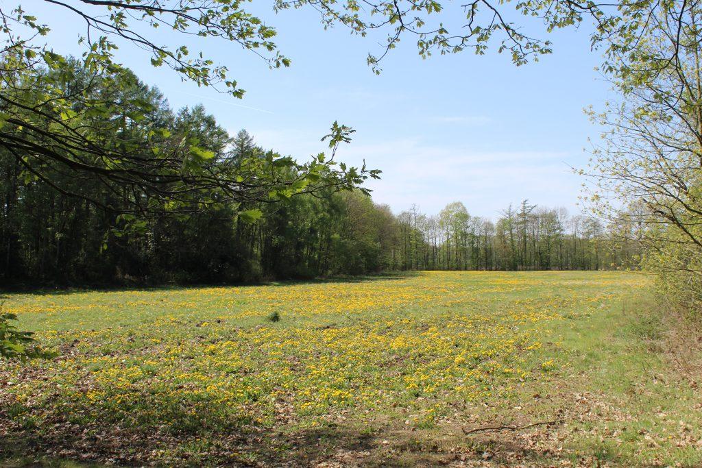 Landschap wandelen in Postel