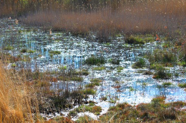 Moeraslandschap wandeling in De Liereman