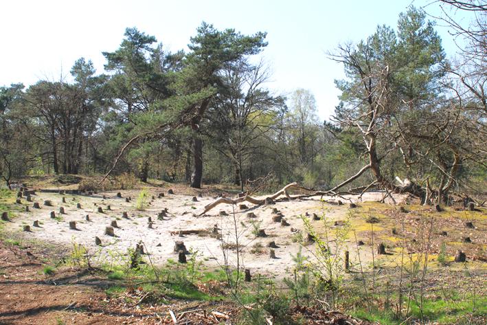 Gekate bos Landschap de Liereman