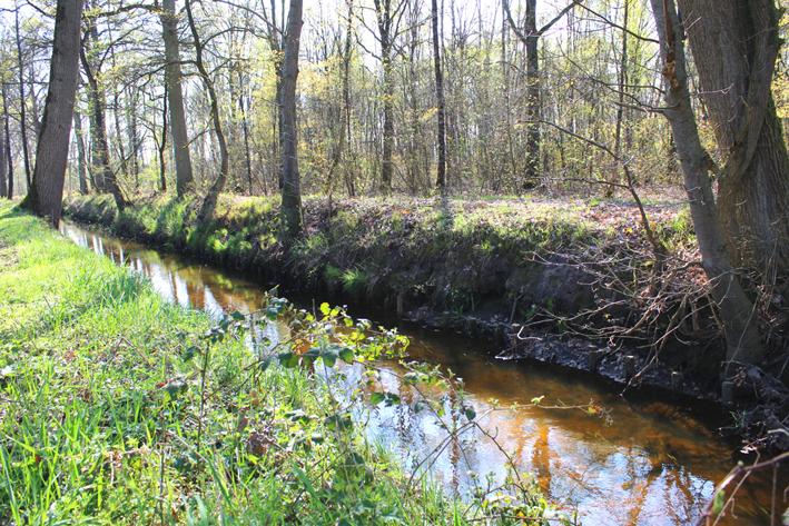 Rivier Aa Wandeling in De Liereman