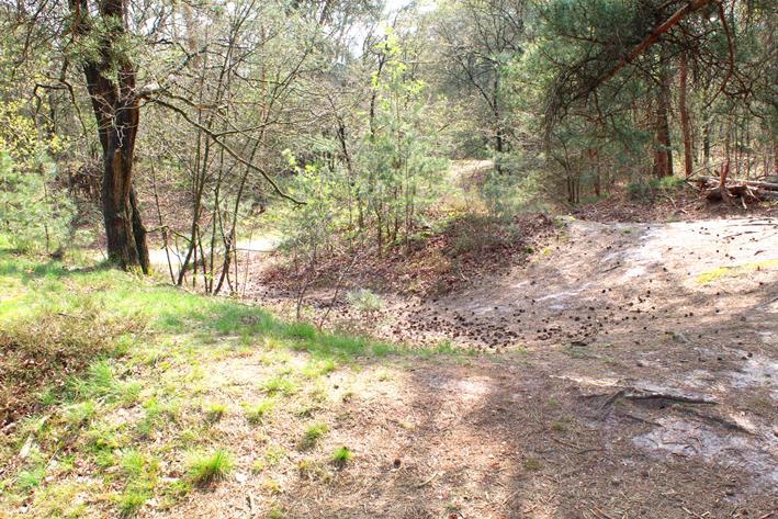 Dug-in Landschap de Liereman