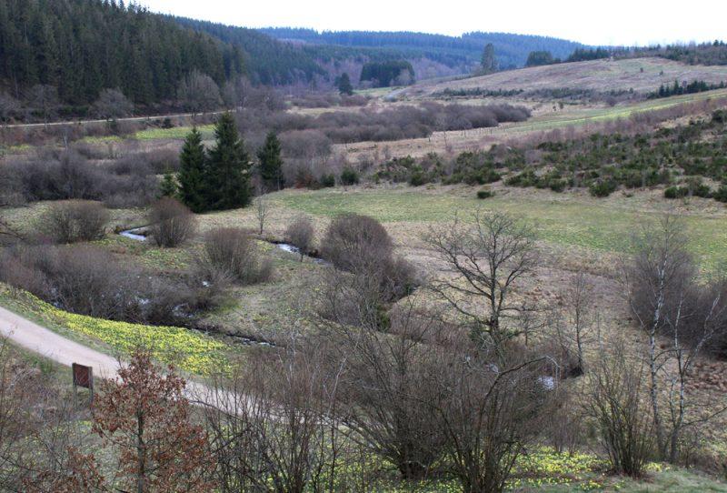 Holzwarche vallei met wilde narcissen