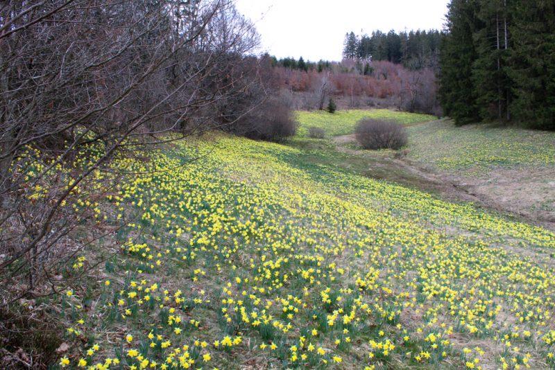 Vallei Holzwarche