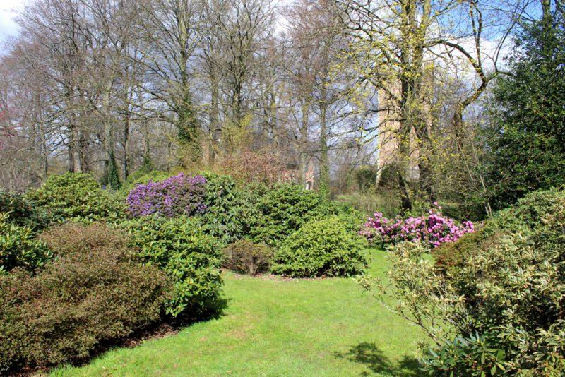 Rododendrons kasteel Groot-Bijgaarden
