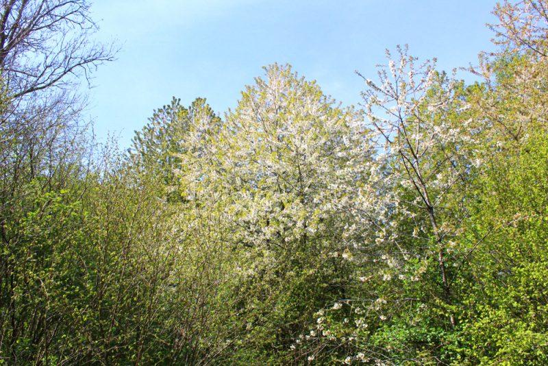 Voorjaarsbloesems