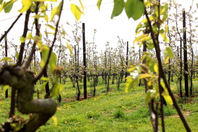 Fruitgaard Galmaarden